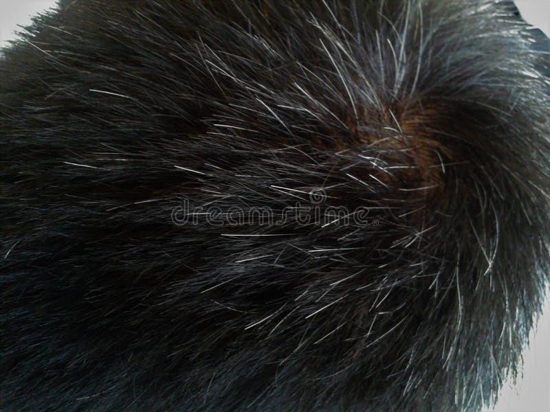 Problema parcial del pelo blanco imagen de archivo