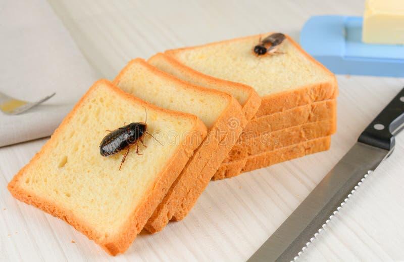 Problemet i huset på grund av kackerlackor som bor i köket fotografering för bildbyråer