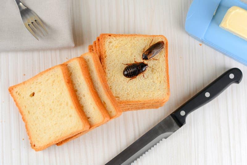 Problemet i huset på grund av kackerlackor som bor i köket royaltyfri fotografi