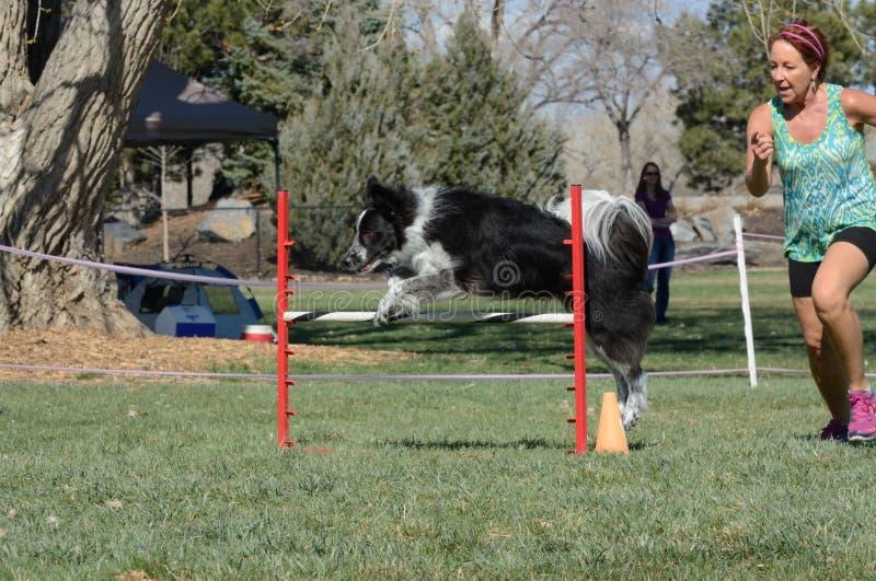 Procès d'agilité de chien de NADAC images libres de droits