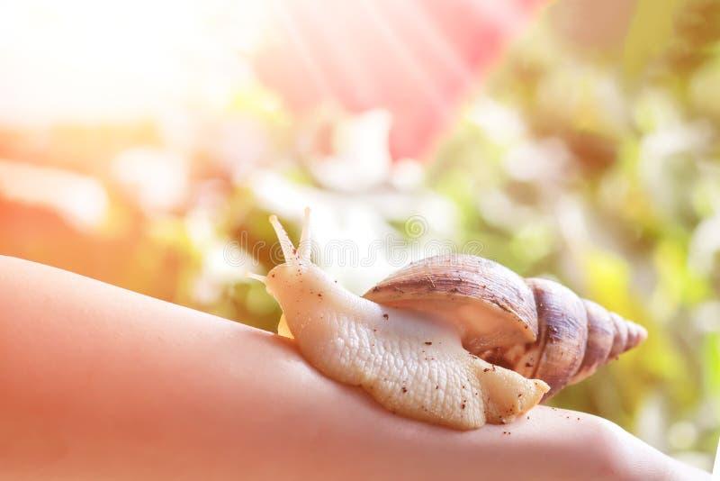 Procédure de Cosmetological femme avec un ahatin d'escargot sur sa main dans un salon de beauté au jour ensoleillé image stock