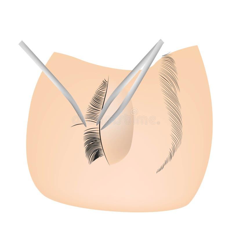 Proc?dure d'extension de cil Oeil de femme avec de longs cils M?ches, fin  illustration stock
