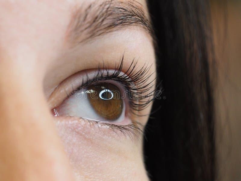 Procedura cosmetica per la cura dei cigli Il risultato di tintura, di ondeggiamento e di laminazione dei cigli fotografia stock libera da diritti
