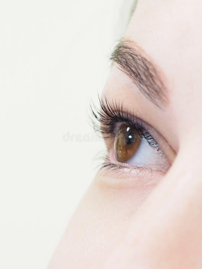 Procedura cosmetica per la cura dei cigli Il risultato di tintura, di ondeggiamento e di laminazione dei cigli immagini stock