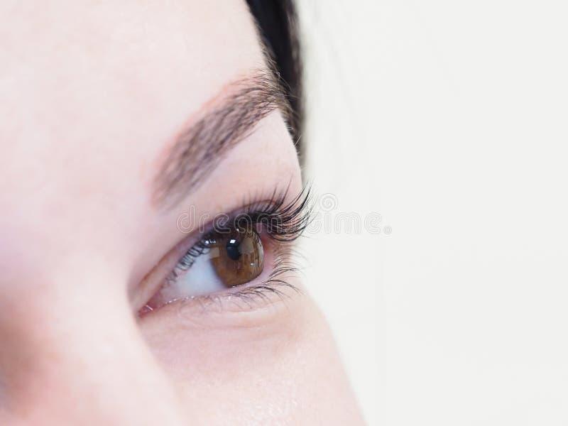 Procedura cosmetica per la cura dei cigli Il risultato di tintura, di ondeggiamento e di laminazione dei cigli immagine stock