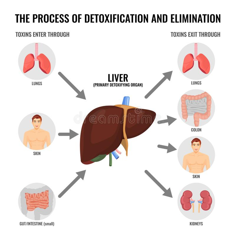 Proces detoxification i eliminaci kreskówki medyczny plakat ilustracja wektor