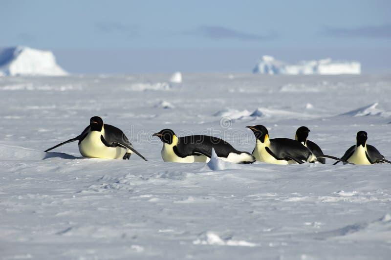 Procesión antártica del pingüino fotos de archivo