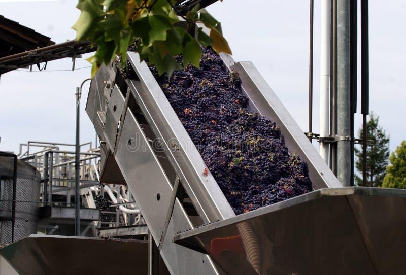 Proceso de la elaboración de vino fotos de archivo