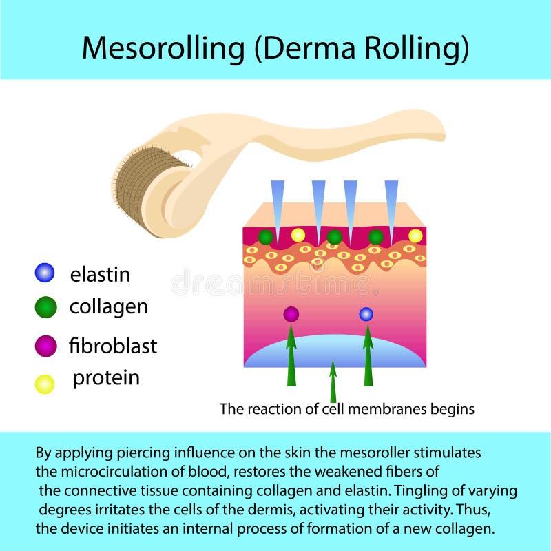 Proceso de Mesorolling con una estructura del describtion y de célula stock de ilustración