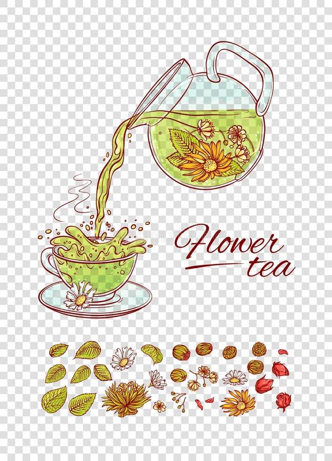 Proceso del brebaje de las flores del constructor del té del vector Haga y vierta la bebida aromática caliente de la taza transpa ilustración del vector