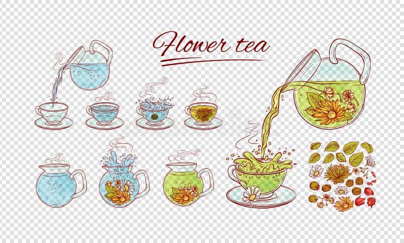 Proceso herbario del brebaje del constructor del té de las flores del vector Haga y vierta la bebida aromática caliente de la taz libre illustration