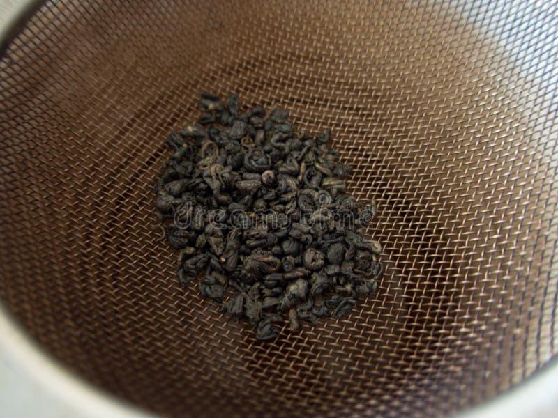 Process av att göra ett nytt grönt te arkivbild
