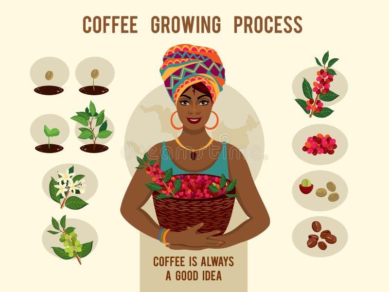 Process av att plantera och att växa en affisch för kaffeträd Växande process för kaffe stock illustrationer