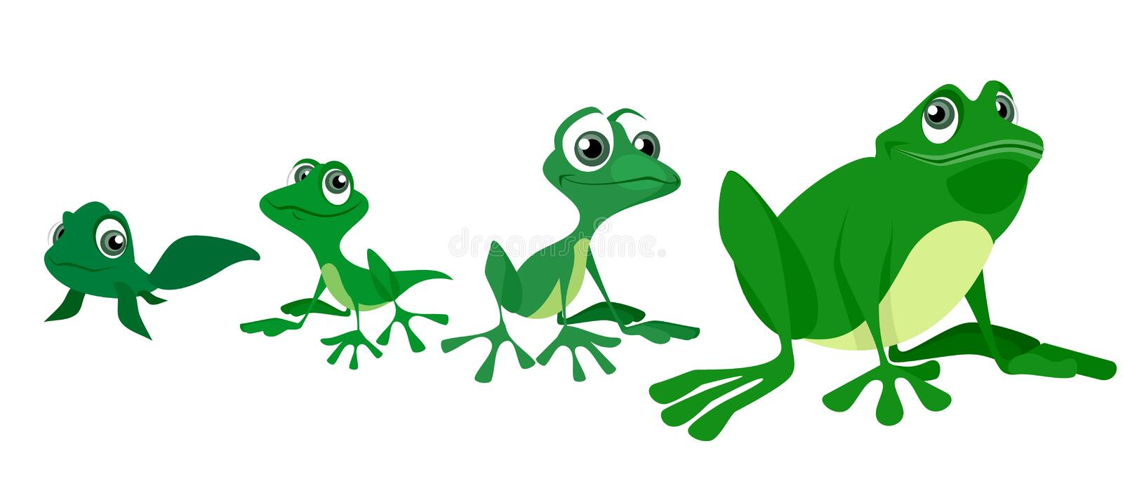 Process of growing a frog. Vector illustration of the process of growing a frog vector illustration