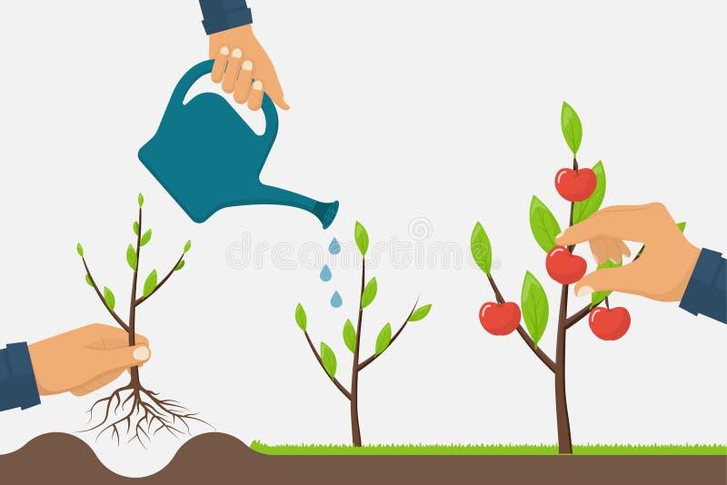 Process growth of tree vector illustration
