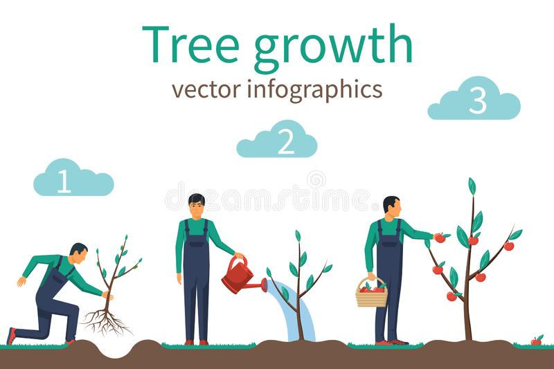Process of growth of tree from planting to fruit ripening. Timeline infographic growth tree. Horticulture concept. Growth stage from sapling to apple. Vector vector illustration