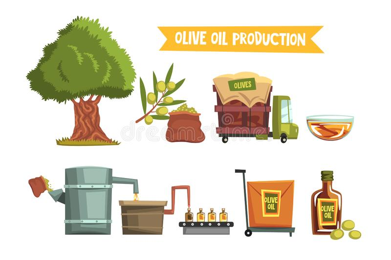 Process of olive oil production from cultivation to finished product growing tree, harvesting, sending to factory. Process of olive oil production by steps from royalty free illustration