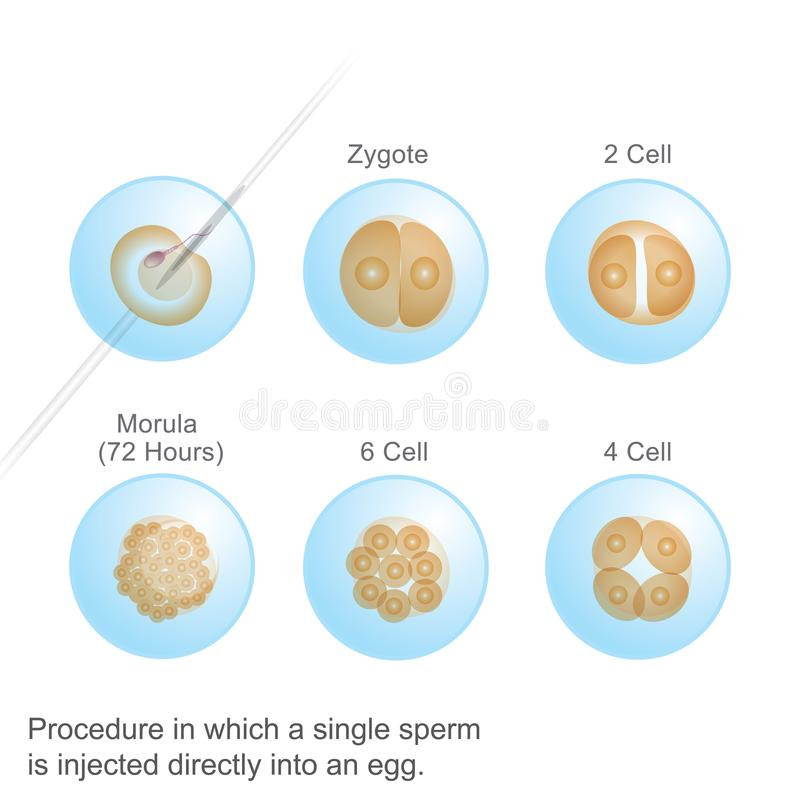 Process in which a single Sperm. stock illustration