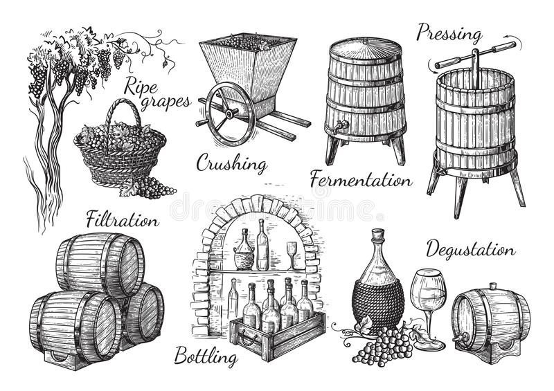 Process of wine production stock illustration