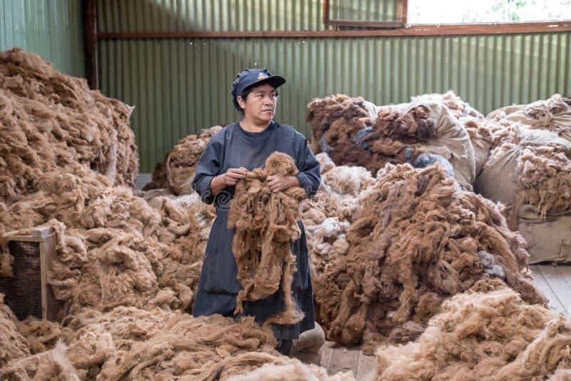 Processamento de lãs da alpaca fotografia de stock royalty free