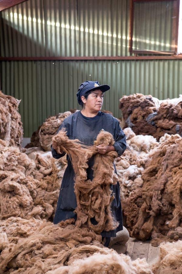 Processamento de lãs da alpaca fotos de stock royalty free