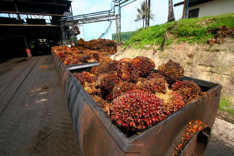 Processamento do petróleo de palma imagem de stock
