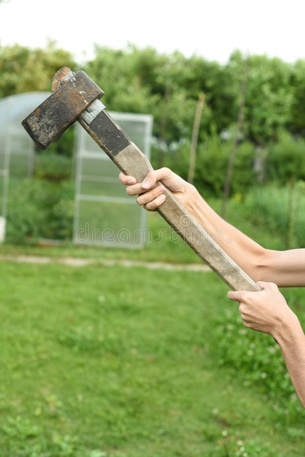 Processen av att klippa tr? med en k?ttyxa Mannen rymmer en yxa royaltyfria foton