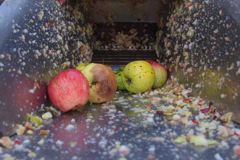 Processing of apples for juice production. Next to the machine for grinding apples are containers with crushed apples royalty free stock images