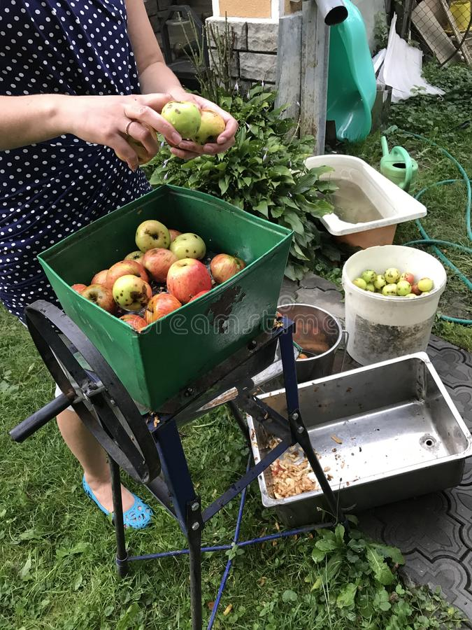 Processing of apples for juice production. A woman fills a mechanical grater to grind apples. Manual drive royalty free stock photos