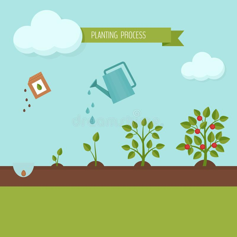 Processo de plantação infographic Fases do crescimento As etapas da planta crescem ilustração stock
