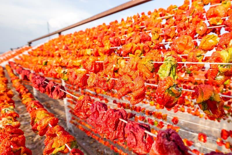 Processo di secchezza del pepe tradizionale in Gaziantep, Turchia fotografia stock libera da diritti