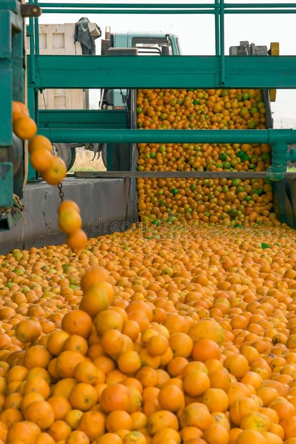 Processo tecnologico al conservificio arancio Massachussets delle arance mature degli agrumi fotografie stock libere da diritti