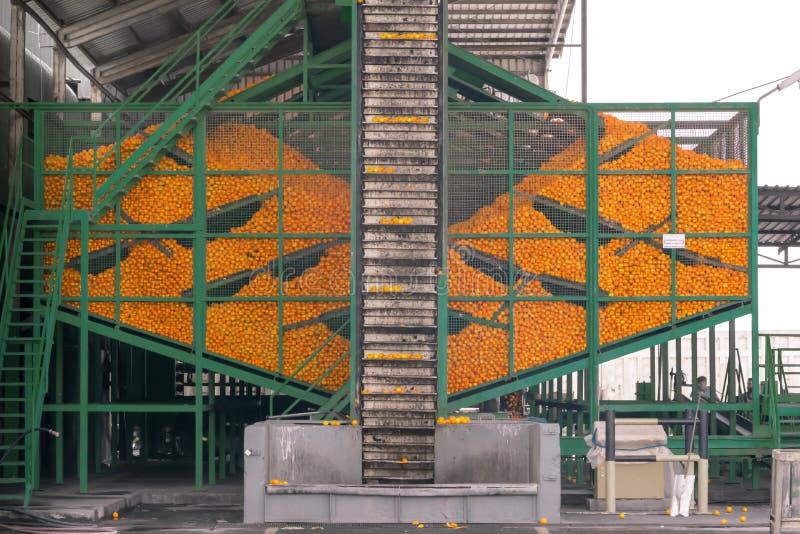Processo tecnologico al conservificio arancio Massachussets delle arance mature degli agrumi nel contenitore del metallo ed in tr fotografia stock libera da diritti