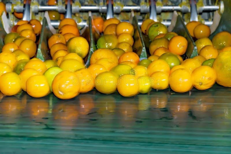 Processo tecnologico nel conservificio o nella pianta arancio Lavaggio e separazione automatici della frutta immagini stock libere da diritti
