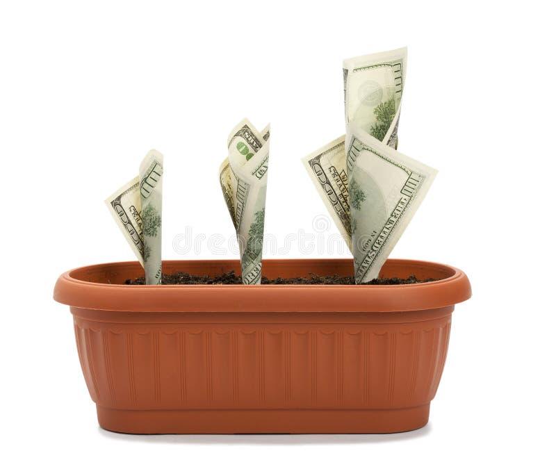 Processus de croissance d'argent image stock