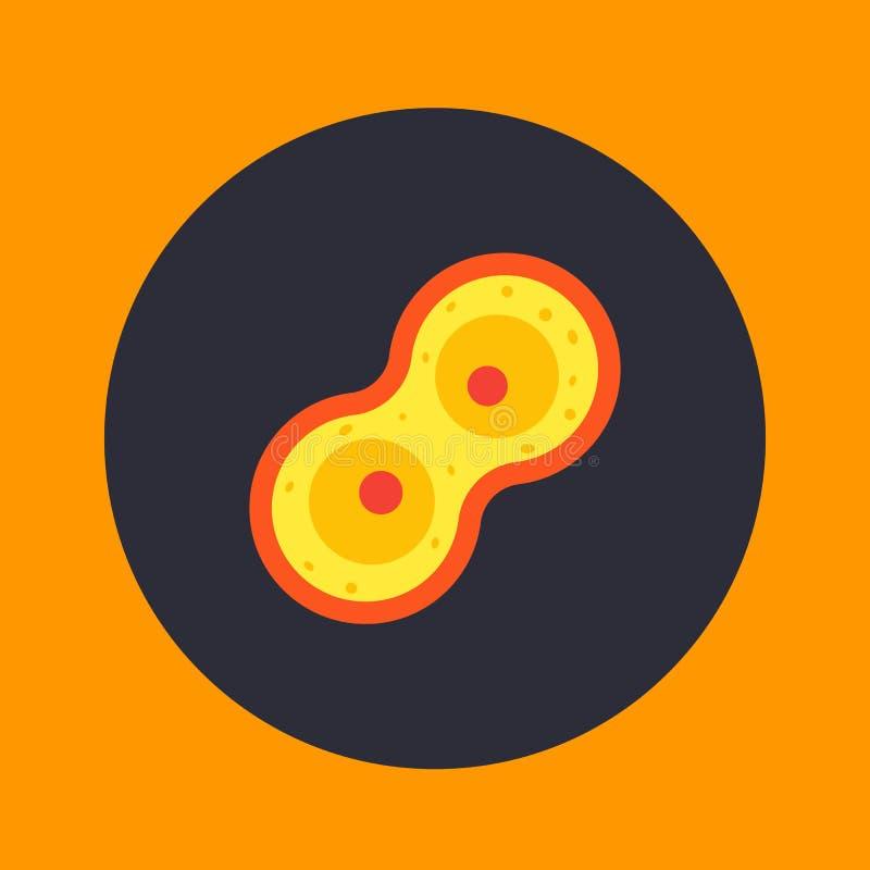 Processus de division cellulaire, icône de mitose illustration libre de droits