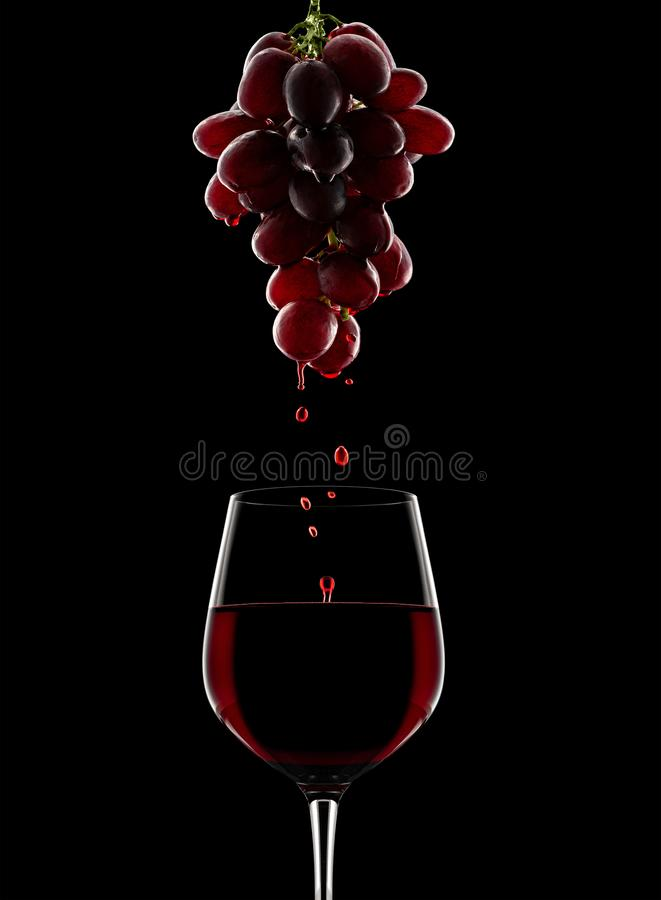 Processus de vinification Raisins rouges photographie stock