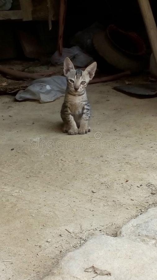 Procurar inocente do gatinho fotos de stock