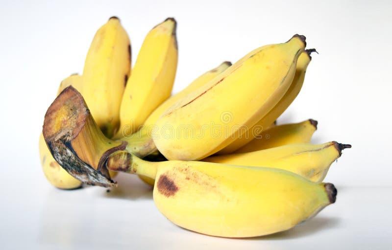Prodotti maturi coltivati freschi della banana, Tailandia fotografia stock libera da diritti