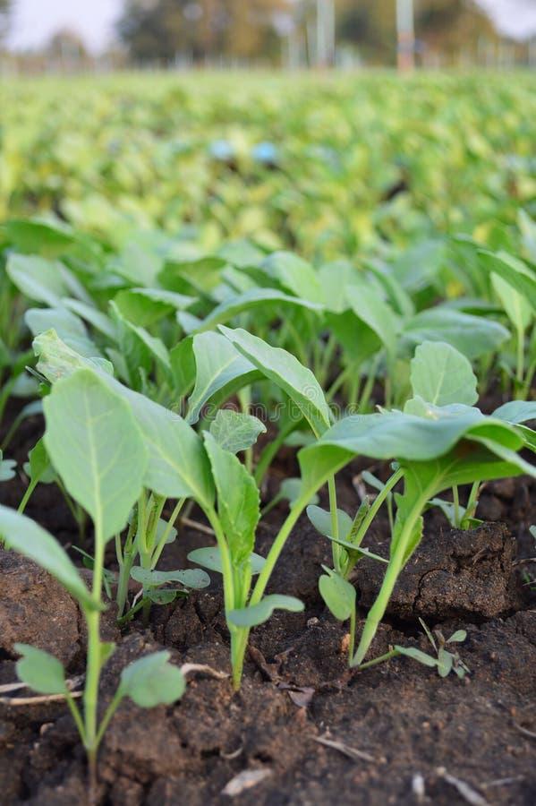 Prodotti organici di verdure fotografie stock