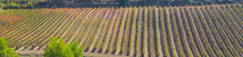 Produção de vinho, camino de Santiago fotografia de stock royalty free