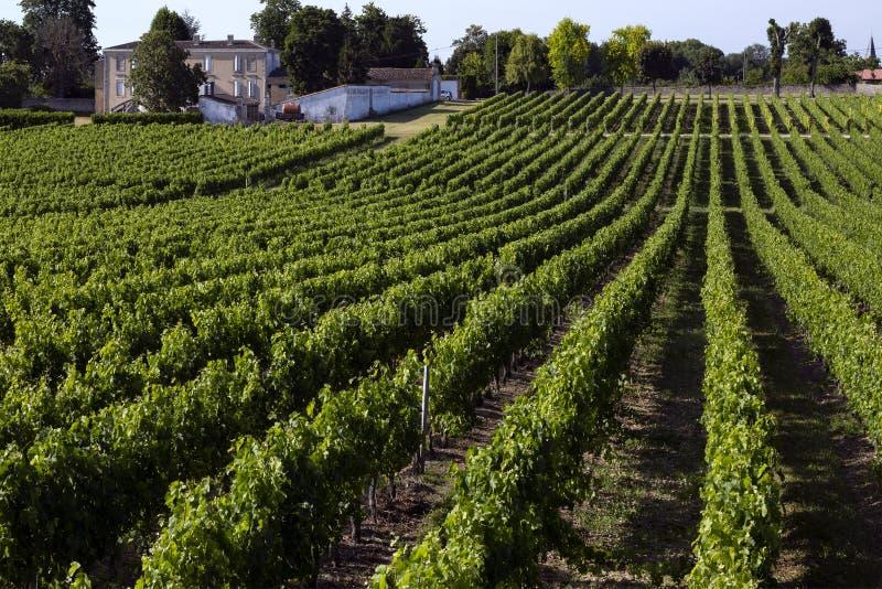 Produção de vinho - vinhedo - Dordogne - França imagens de stock