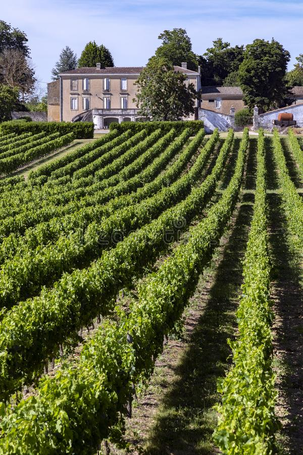 Produção de vinho - vinhedo no Dordogne - o França fotos de stock
