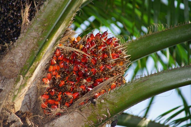 Produções de petróleo da palma foto de stock royalty free