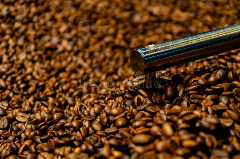 Producción de los granos de café de Brown foto de archivo
