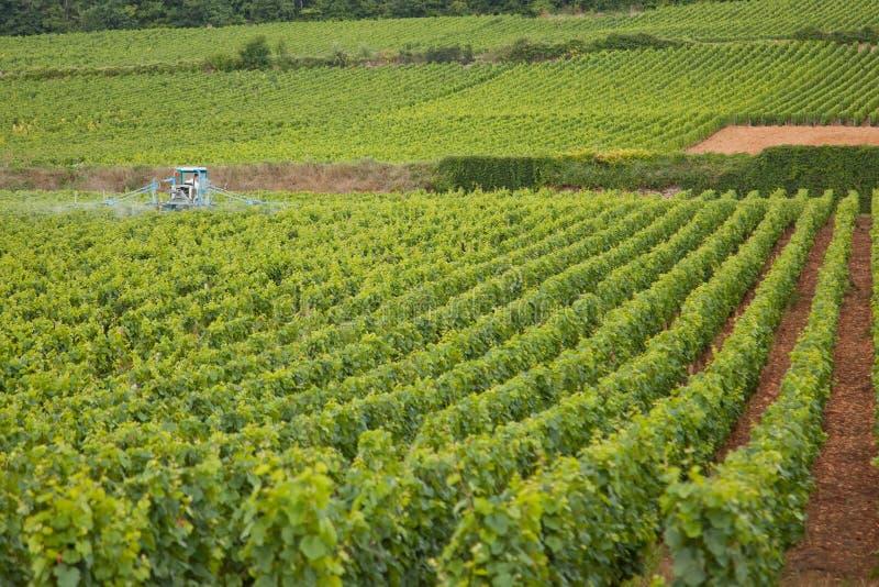 Producción de vino de Borgoña imágenes de archivo libres de regalías