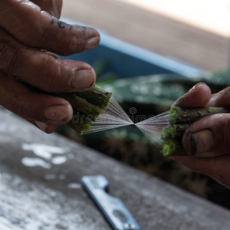 Producción hecha a mano de seda tradicional del loto en el lago myanmar del inle imágenes de archivo libres de regalías