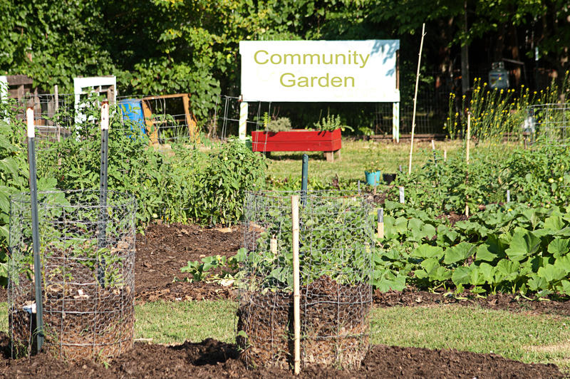 Download Produce Growing In Community Garden Stock Photo - Image: 25510000