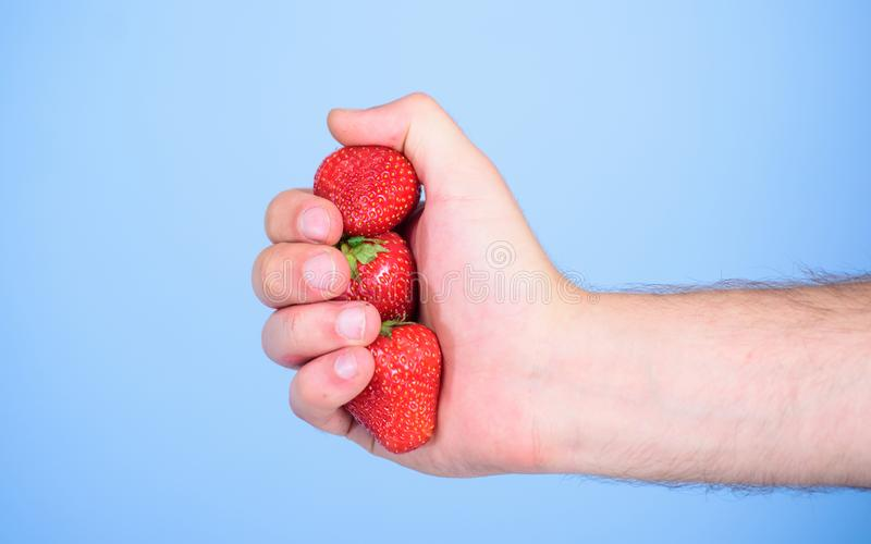 Producing fresh strawberry juice. Squeezing fresh strawberry juice. Hand holds red sweet ripe berries blue background. Strawberries fresh gathered harvest in royalty free stock image