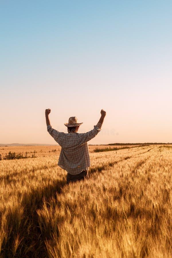 Producteur de blé victorieux heureux fier avec des mains augmentées dans V image stock